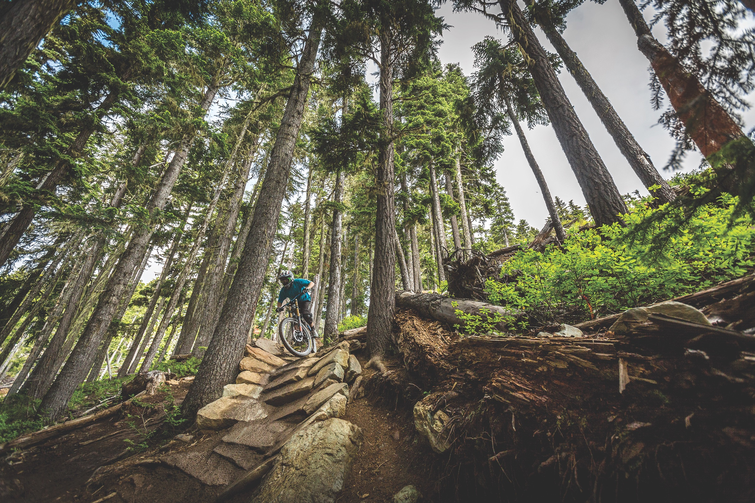 biking, forest, whistler, extreme sports, mountain, bristish columbia