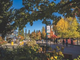 Whistler, fall, british columbia, outdoors, mountains, olympics